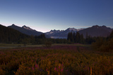 Mendenhall Glacier and the Coast Mountains Above a Field of Fireweed Photographic Print by Matthias Breiter