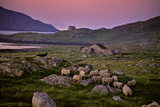 A Sheepdog Guards Its Flock Grazing on a Rock Filled Field Lámina fotográfica por Jim Richardson