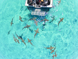 An Aerial View of Lemon Sharks Near the Surface Behind a Boat Photographic Print by Jim Abernethy