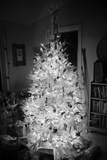An Infrared Shot of a Brightly-lit Indoor Christmas Tree Photographic Print by Stephen Alvarez