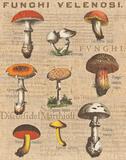 Funghi Velenosi I Poster by Wild Apple Portfolio