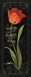 Tulipa Botanica II Posters by Lisa Audit