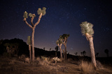 Joshua Trees Standing Below a Starry Sky Photographic Print by Ben Horton