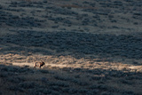 Sunlight Illuminates An Elk, Cervus Elaphus, on a Prairie in the Fall Photographic Print by Tom Murphy