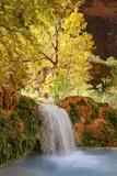 A Waterfall Flows Beneath Cottonwood Trees Into Havasu Creek Fotografisk tryk af Derek Von Briesen