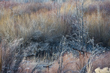 A  Subtle Collage of Color: Willows, Grasses and Bare Branches Photographic Print by Beth Wald