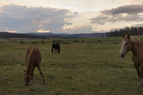 Horses Grazing in a Field at Twilight Photographic Print by Richard Olsenius