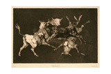 Disparate De Toritos. Lluvia De Toros, 1887, Spanish School Giclee Print by Francisco De Goya