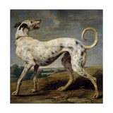 Un Galgo Blanco, 17th Century, Flemish School Giclee Print by Paul de Vos