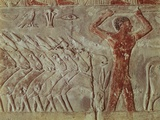 Egypt, Cairo, Ancient Memphis, Saqqara, Relief of Farmer Leading Donkeys Photographic Print