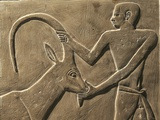 Relief of Man and Antelope Photographic Print