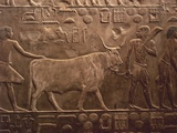 Relief of Agricultural Works, Workers and Ox at Necropolis Photographic Print