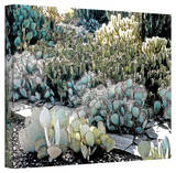 Linda Parker 'Desert Botanical Garden' Gallery-Wrapped Canvas Gallery Wrapped Canvas by Linda Parker