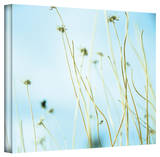 Mark Ross '30 Second Day Dream' Wrapped Canvas Art Stretched Canvas Print by Mark Ross