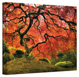 John Black ' Japanese Tree ' Gallery Wrapped Canvas Stretched Canvas Print by John Black