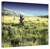 Mark Ross 'Fall Creeps' Wrapped Canvas Art Stretched Canvas Print by Mark Ross