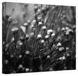 Mark Ross 'Anticipation' Wrapped Canvas Art Stretched Canvas Print by Mark Ross