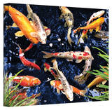 George Zucconi 'Koi' Wrapped Canvas Stretched Canvas Print by George Zucconi