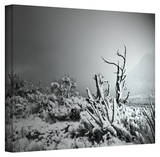Mark Ross 'You Just Do' Wrapped Canvas Art Stretched Canvas Print by Mark Ross