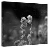 Mark Ross 'Puff' Wrapped Canvas Art Stretched Canvas Print by Mark Ross