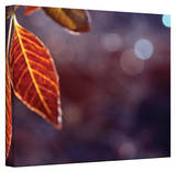 Mark Ross, 'Fall Lights' Wrapped Canvas Stretched Canvas Print by Mark Ross