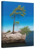 Ken Kirsch 'Tree Rock' Wrapped Canvas Gallery Wrapped Canvas by Ken Kirsch