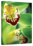Kathy Yates 'Cymbidium Seafoam Emerald Orchid' Canvas Art Stretched Canvas Print by Kathy Yates