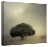 Mark Ross 'Room to Grow' Wrapped Canvas Art Stretched Canvas Print by Mark Ross