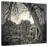 Mark Ross 'Listen to Whispers' Wrapped Canvas Art Stretched Canvas Print by Mark Ross