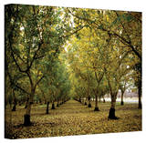 Kathy Yates 'Fall Orchard' Canvas Art Stretched Canvas Print by Kathy Yates