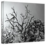 Mark Ross 'When Nothing Else Exists' Wrapped Canvas Art Stretched Canvas Print by Mark Ross