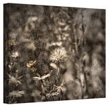 Mark Ross 'Dormant' Wrapped Canvas Art Stretched Canvas Print by Mark Ross