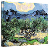 Vincent van Gogh 'Olive Trees' Wrapped Canvas Art Stretched Canvas Print by Vincent van Gogh