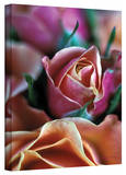 Kathy Yates 'Mauve and Peach Roses' Canvas Art Stretched Canvas Print by Kathy Yates