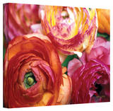 Kathy Yates 'Ranunculus Close-up' Canvas Art Stretched Canvas Print by Kathy Yates