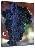 Kathy Yates 'On The Vine' Canvas Art Stretched Canvas Print by Kathy Yates