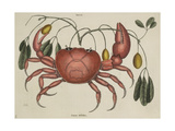 The Land Crab Giclee Print