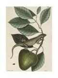 Iguana Giclee Print