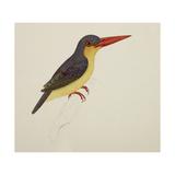Stork-Billed Kingfisher Giclee Print by J. Briois