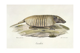 An Armadillo Giclee Print by  Werner