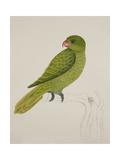 Blue-Backed Parrot Reproduction procédé giclée par J. Briois