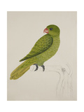Blue-Backed Parrot Giclee Print by J. Briois