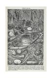 Verduras Lámina giclée por Isabella Beeton
