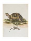 Tortoise and Lizard Giclee Print