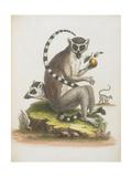 A Macaque Giclee Print