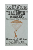 "The Baldwin"" Monkey"" Giclee Print"