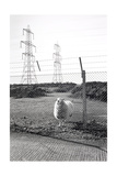 Blocked Public Footpath in MOD Land, Lydd 1988 From Our Forbidden Land Giclee Print by Fay Godwin