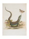 Lizard and Butterfly Giclee Print