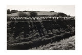 Royal Military Canal, Pett Level 1971 From Romney Marsh Series Giclee Print by Fay Godwin