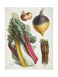 Various Vegetables Including Carrots, Onions, Swede and Chard Giclee Print